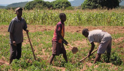 Promoting Correct Fertilizer Use through Information and Commitment Savings using Mobile Banking